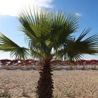 Plaja Club Esse Sunbeach în concesiune 4